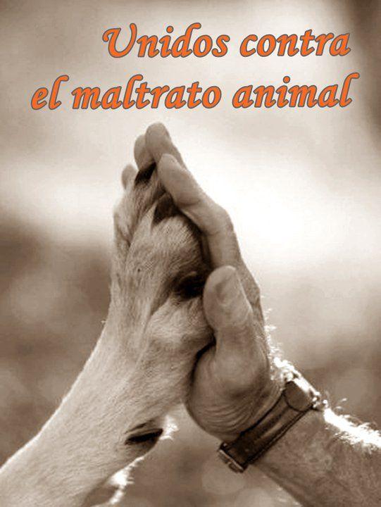 Unidos contra el maltrato animal