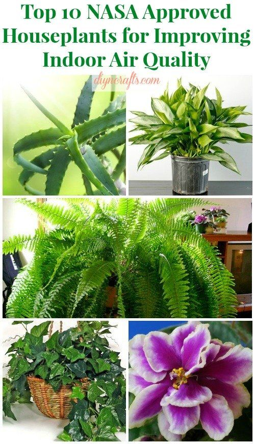Top 10 NASA Approved Houseplants for Improving Indoor Air Quality – DIY &... I want the peace lily, Chinese evergreen, spider plant and African violet.