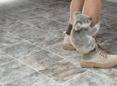 I just died of cuteness. I NEED to go to Australia and hold a koala before i die. mark my words.