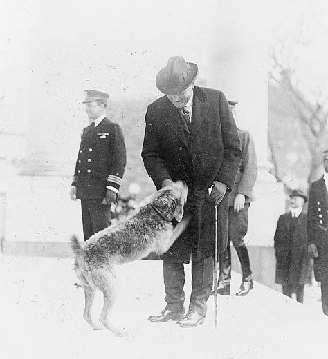 Laddie Boy greets President Harding upon his arrival home from a trip.  Laddie Boy was President Warren G. Harding's Airedale, and according to The Smithsonian, the most popular presidential pet ever.  I can't believe I never heard of him.