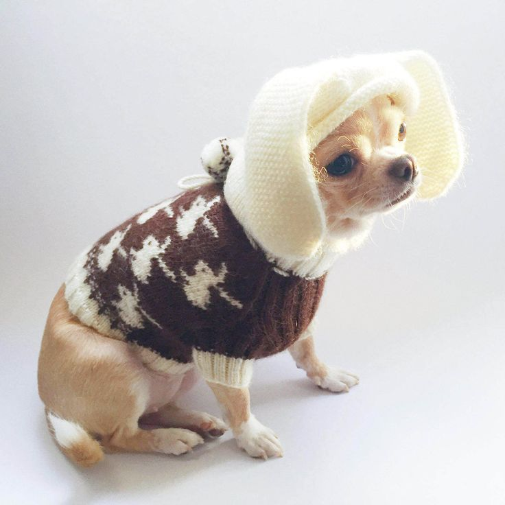 Chihuahua sweater Brown dog sweater Dog clothing Chihuahua clothes Small dog sweater Knit dog sweater Sweater for puppy Easter dog costume by KristinaSHaSHop on Etsy