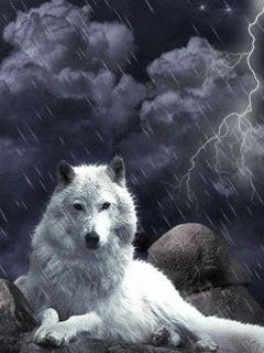 White Wolf in a storm. orig pinner Debbie St George