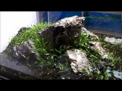 Zakładanie akwarium naturalnego - YouTube
