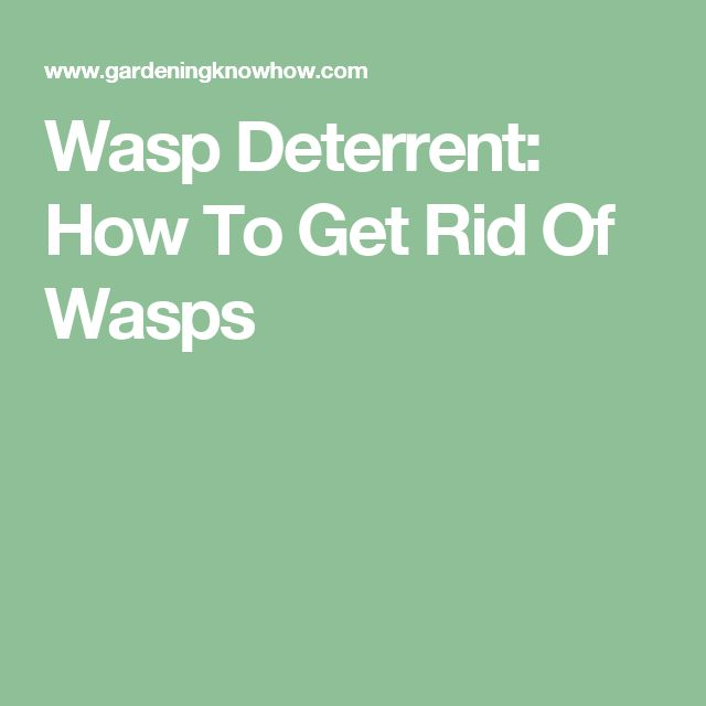 Wasp Deterrent: How To Get Rid Of Wasps