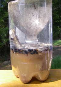 "home-made fly trap  The ""recipe"" I'm going to use is:  3 cups of water  ¼ (one quarter) cup sugar  ¼ (one quarter) cup white vinegar"