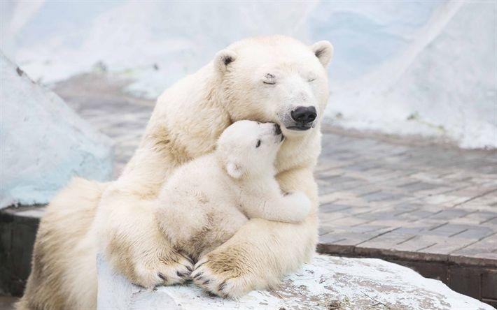 Download wallpapers polar bears, winter, snow, predators, small white bear cub