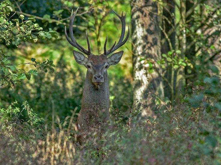 Sylwester Kocot fotografia przyrodnicza