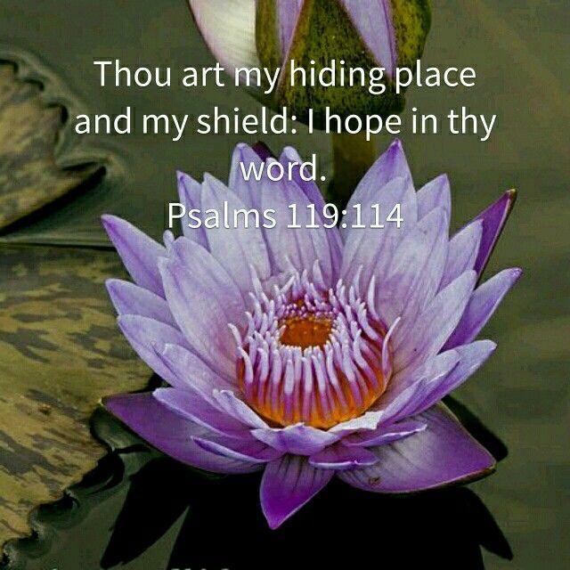 Psalms 119: 114. (KJV)