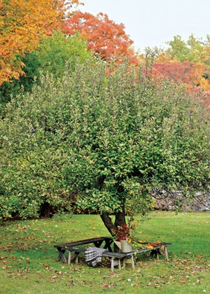 """Step into My Garden PERFECT PERCH:   """"I surrounded a big apple tree with two sets of old picnic-table benches,"""" Katherine says. """"It's a great place to sit and watch wildlife. There's always a lot going on in a fruit tree."""""""