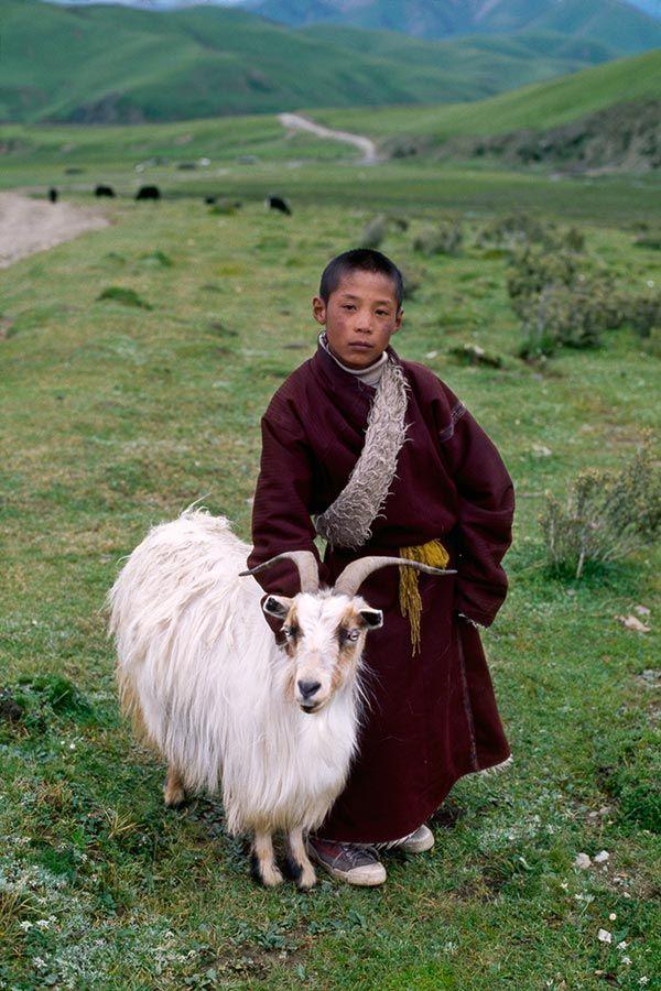 The little shepherd . Tibet