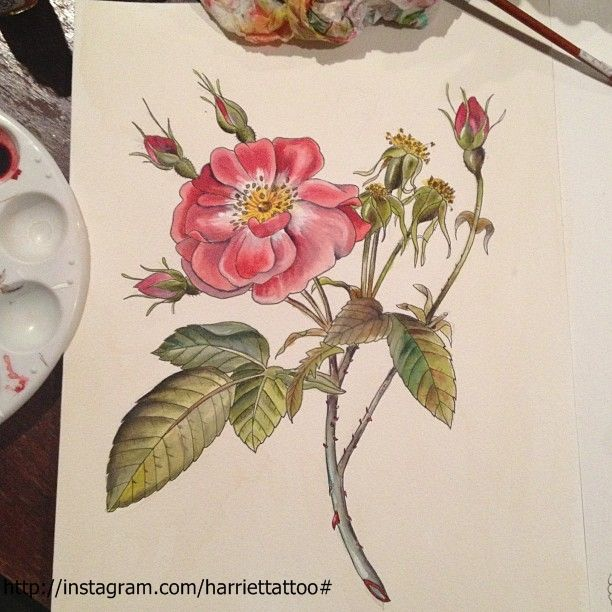 Wild rose watercolour. tattoo design by me @harriettattoo
