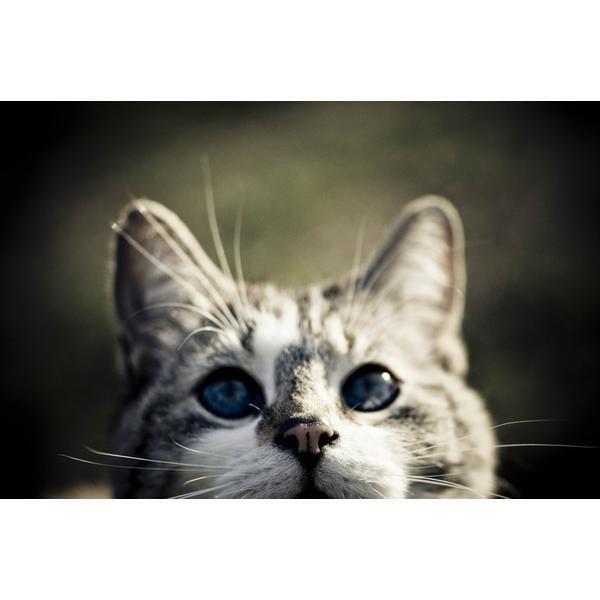Las razas de gatos más extrañas | eHow en Español
