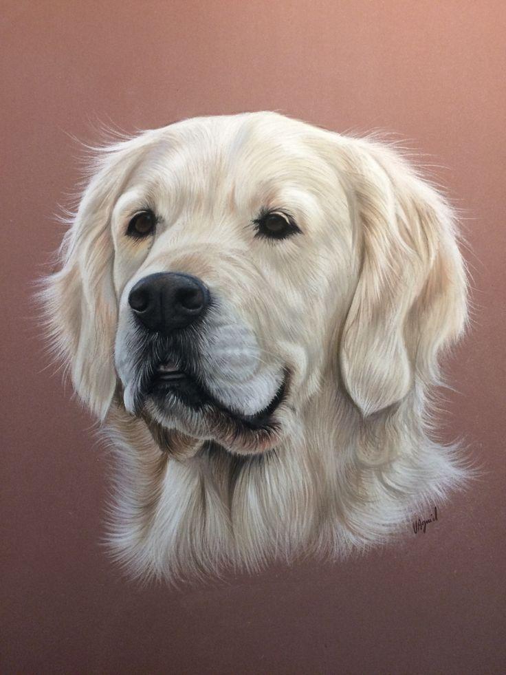 Les 96 meilleures images du tableau les pastels de vir collection chiens sur pinterest - Dessin golden retriever ...