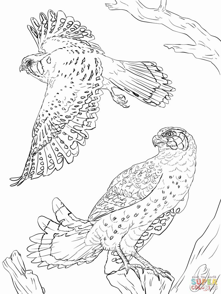 Peregrine Falcon Coloring Page Awesome Peregrine Falcon