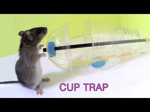 How To Make A Cat Trap Out Of Household Items