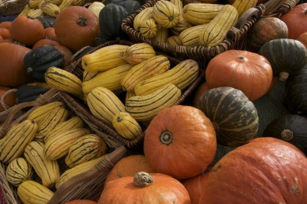 Store pumpkins and squash on straw other harvest tips