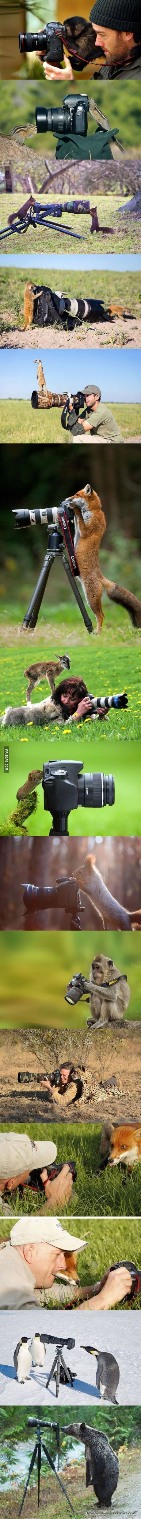 Animals Who Are Interested In Photography