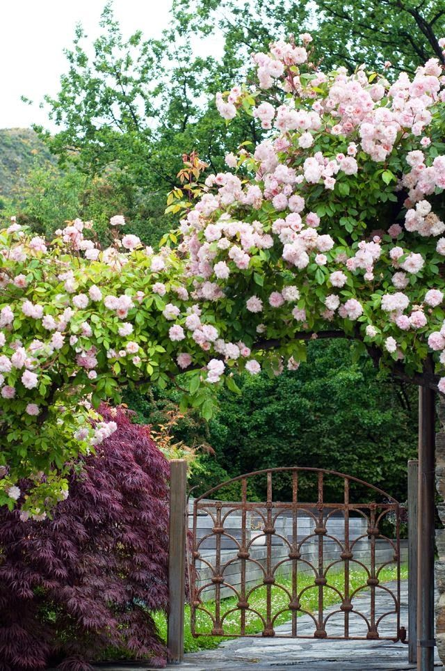 Trellis Covered in roses... I love rose covered entrances! It's like you are walking into another world.