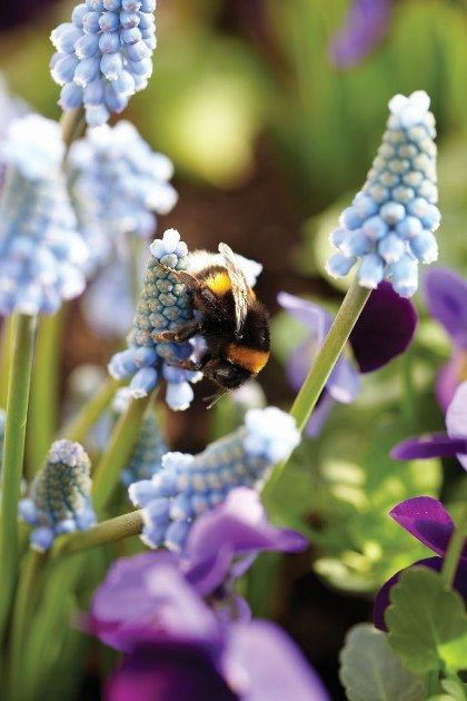 bulbs for the bees