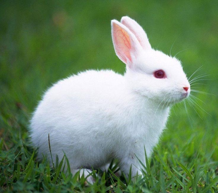 kaninchen können acht bis zwölf jahre leben also stellen