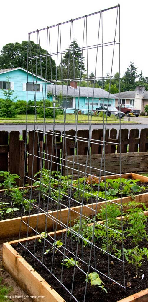 An easy way to make a trellis to grow your vegetables vertically on. It only takes a few tools and about an hour to make this trellis.