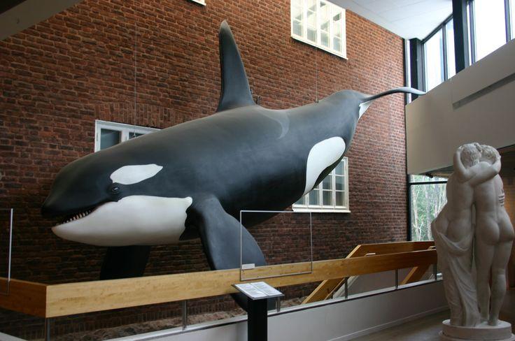 goteborg  muzeum historii naturalnej