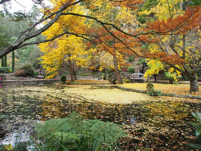 Alfred Nicholas Garden during autumn