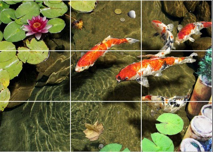 1000 images about koi on pinterest japanese koi long for Koi fish pond help