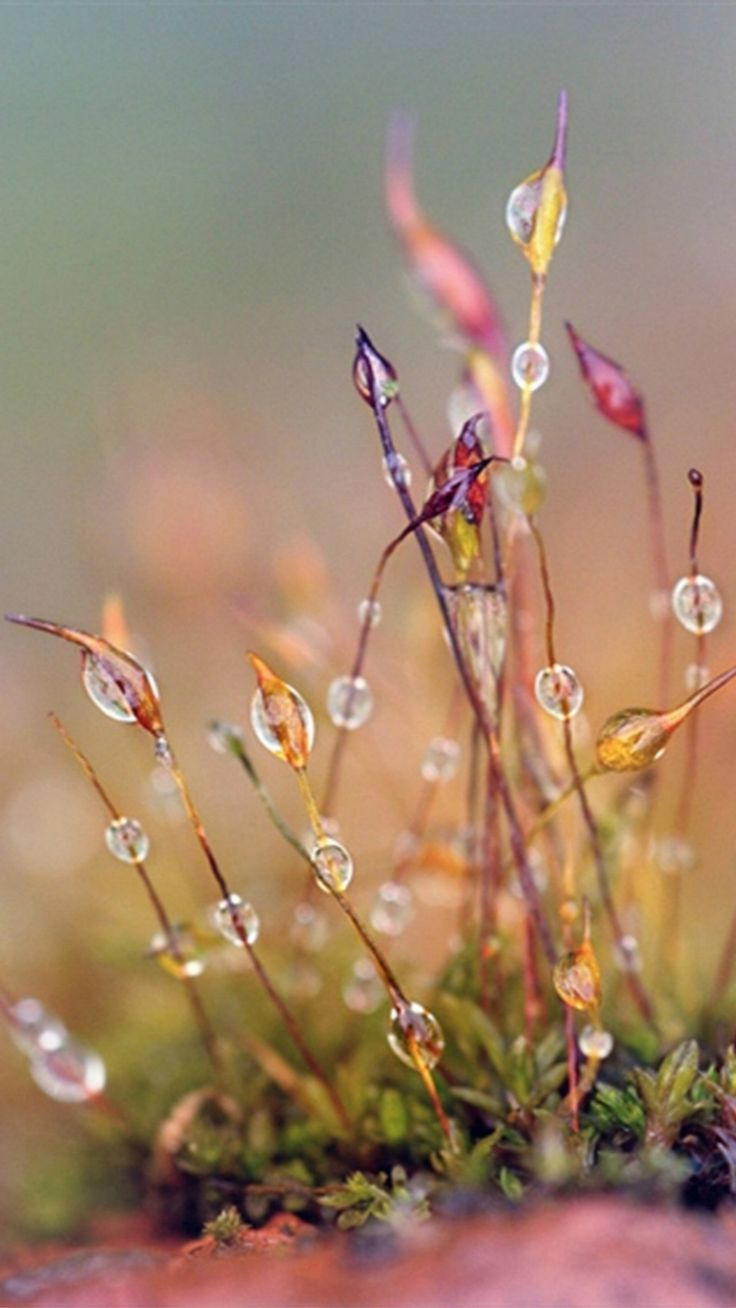 Morning dew on the grass HD wallpaper