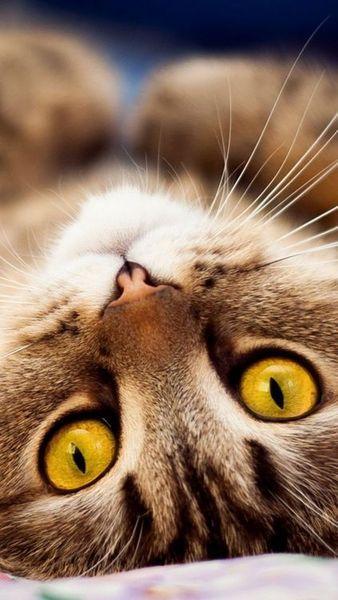 Gorgeous cat ✿⊱╮