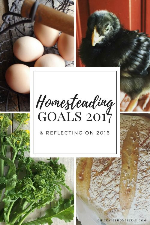 Goodbye 2016. Hello 2017. It's such an inspiring time of year, right? It's time for some reflection and homesteading goals! This past year was so full of growth for our family. While our homesteading progress was slower then I'd like, we still made a huge garden expansion, and  learned so much about Back to Eden …