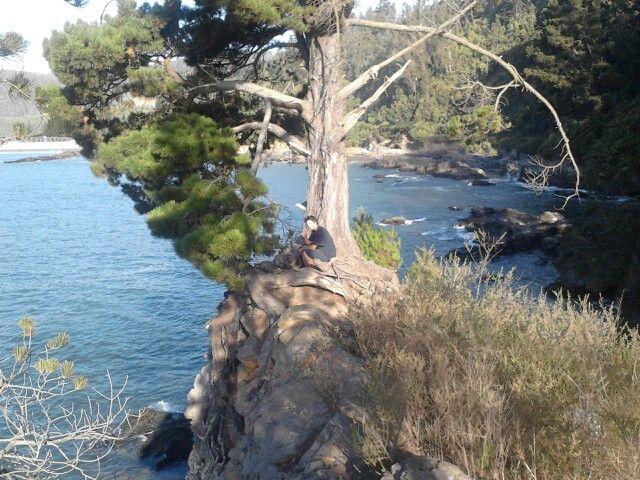 Rinconada playa colcura