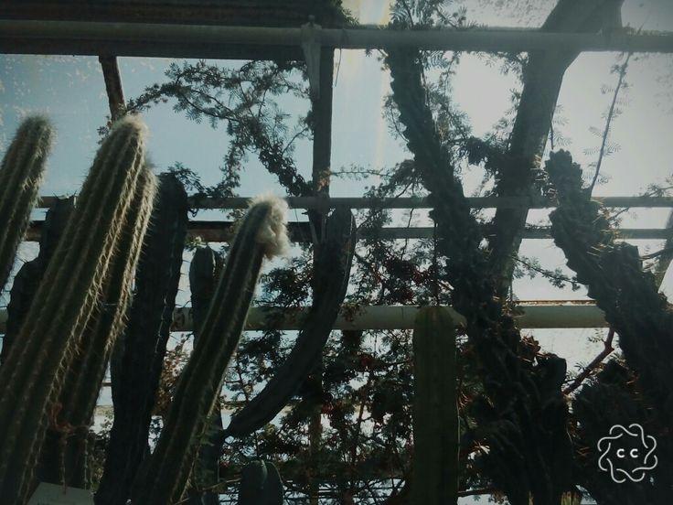 Ďalší sen splnený. #botanicalgarden  🌵🌴🌱🌿🌷🌺🌻🌼🌸