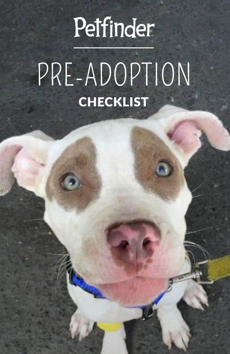 Chances are pretty good that bringing a pet into your life will make it even better. Before beginning your search, check out Petfinder's pre-adoption checklist. Make sure you're emotionally, financially and logistically prepared to welcome a cat or dog into your life.