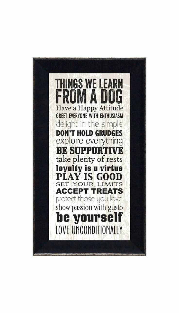 Things We Can Learn From a Dog - hopecafe.net