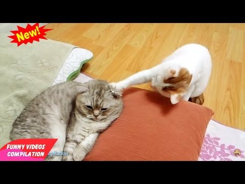 Funny Cats Funny Cat Videos Best Funny Videos 2015 Funny Videos Compilation - http://positivelifemagazine.com/funny-cats-funny-cat-videos-best-funny-videos-2015-funny-videos-compilation-2/