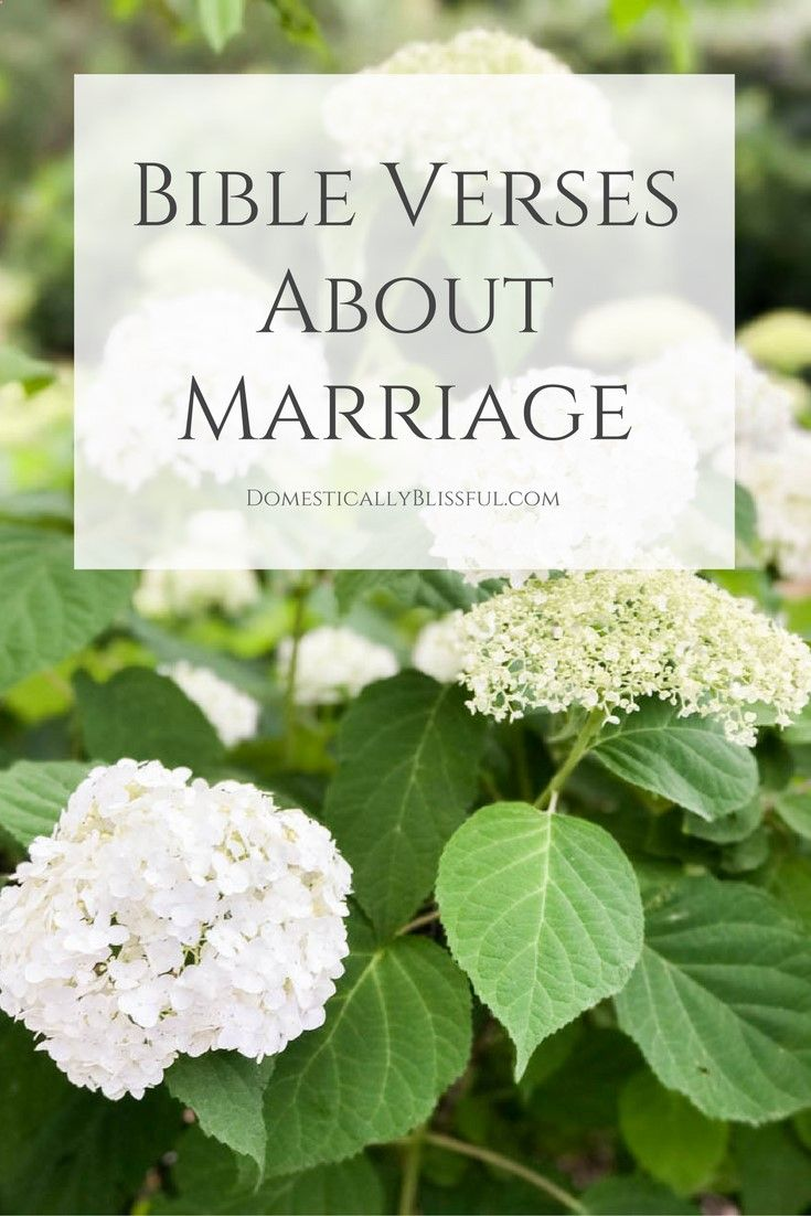 best 25 bible verses about marriage ideas on pinterest
