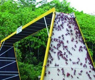 Crab Bridge on Christmas Island in Australia is really for crabs - to help the crabs during migration season. (Photo: Courtesy of Christmas Island National Park)