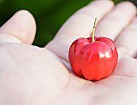 Acerola: Combata a anemia com os poderes dessa frutinha! Veja outros benefícios