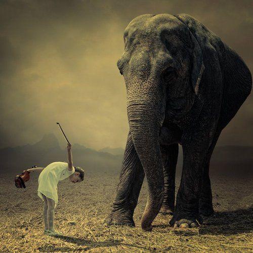 .: Elephants, Photos, Animals, Photomanipulation, Photo Manipulation, Artist Caras, Photography