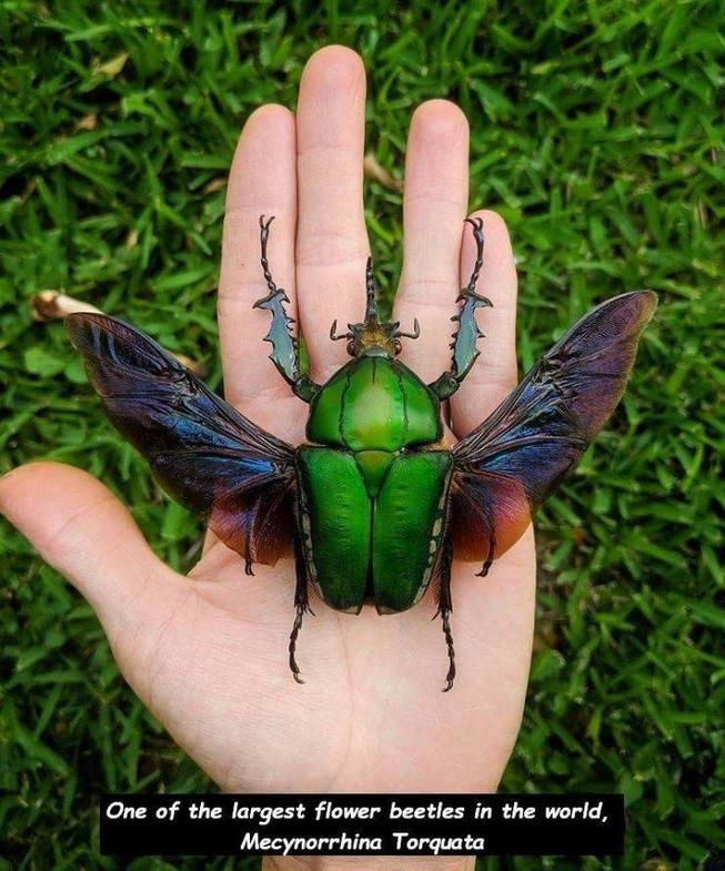 Grosser Kafer Insektenkunst Kafer Insekt Und Seltsame Kreaturen