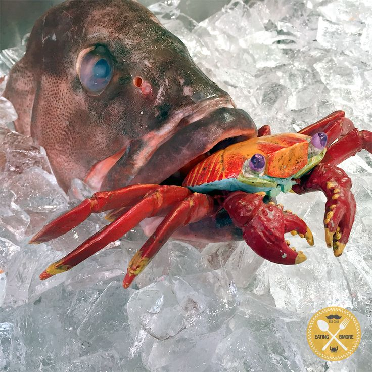11 best bmore seafood images on pinterest seafood sea for Nearest fresh fish market