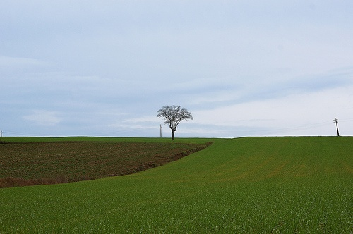 the #Umbria tree