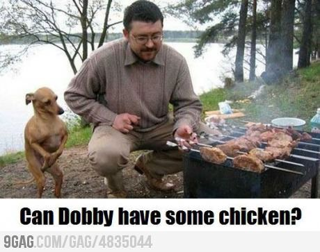 Dobby Doggy: Dobby, Dogs, Harrypotter, Funny Stuff, Harry Potter, Humor, Funnies, Animal