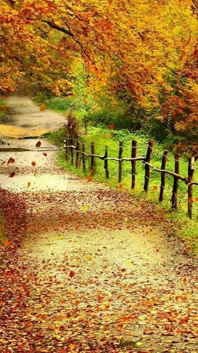 Partly responsible for this photo's beauty is the fence. The leaves are the focus but the fence lends structure to the scene. Remember this when you design your yard: in landscaping, too, a fence (in addition to its practical contributions) lends structure, helping you frame your landscape design and make it more appealing to the viewer. Here are some fence ideas in pictures if you need help selecting a fence style: http://landscaping.about.com/od/galleryoflandscapephotos/ig/Fence-Pictures/