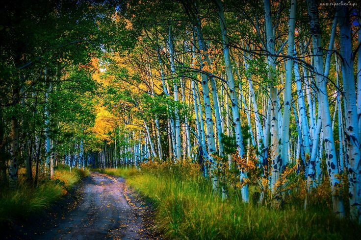 Brzozowy, Las, Droga, Jesień