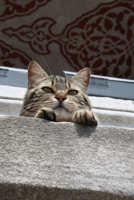 Istanbul cat by Slavophile, via Flickr