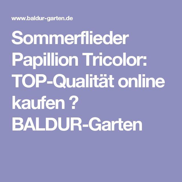 Sommerflieder Papillion Tricolor: TOP-Qualität online kaufen  BALDUR-Garten