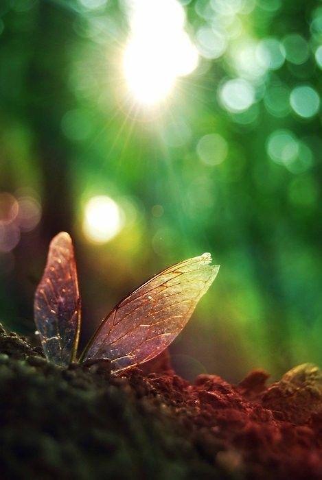 Mystical wings....