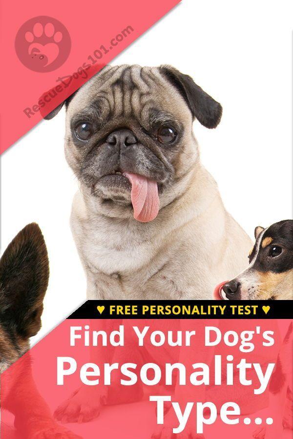 Pin On Dog Life Hacks
